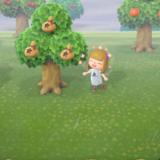 あつ森のフルーツの木